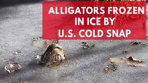 News video: Alligators frozen in ice by US cold snap