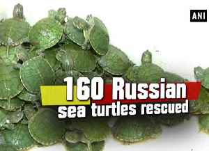 News video: 160 Russian sea turtles rescued