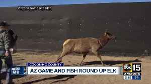 Az game and fish moving some elk to west one news page video for Va game and fish