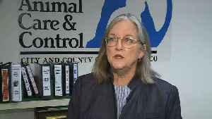 News video: PIT BULL ATTACK: Animal Care and Control Department Director Virginia Donahue Talks About Dog Attack