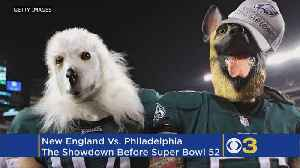News video: New England Vs. Philadelphia, The Showdown Before The Super Bowl