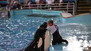 News video: Orcas 'can imitate human speech'