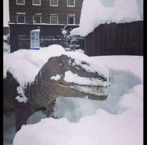 News video: Snow joke for these chilly dinosaurs