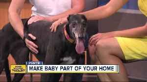 News video: Feb. 11 Rescues in Action: Make Baby a part of your family