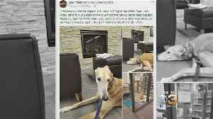 News video: Lonely Library Dog Becomes Internet Sensation