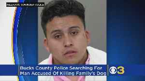 News video: Police: Man Kills Family's Pet Dog, Might Be Trying To Flee To Honduras