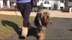 News video: VIDEO: College student works to keep Otterhound breed alive