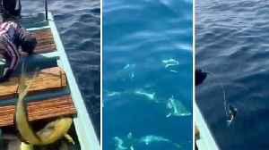 News video: Incredible footage shows sailors feeding wild pod of dolphins