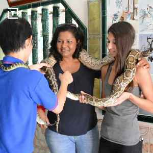 News video: Visit The World's Only Snake Temple