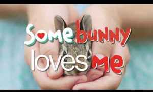 News video: Somebunny Loves Me - A book about pets from Parry Gripp!