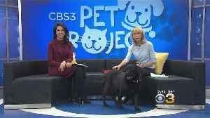 News video: CBS 3 Pet Project: Walking Your Dog