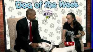 News video: Dog of the Week: Blue