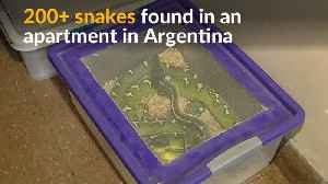 News video: Hundreds of snakes discovered in Argentinean apartment