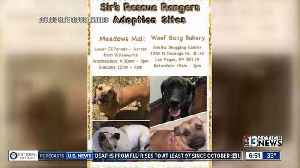 News video: Pucks 4 Paws: Win Vegas Golden Knights tickets while helping Sir's Rescue Rangers