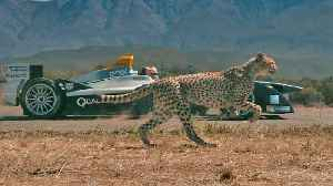 News video: Electric powered car goes head-to-head with a cheetah - who will win?