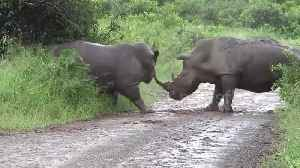 News video: Savage rhinoceros fight caught on camera