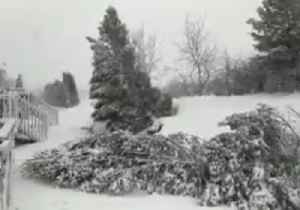 News video: Nor'easter Knocks Down Trees in Pennsylvania