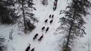 News video: Mushers Move Through Anchorage Woods in Ceremonial Iditarod Start