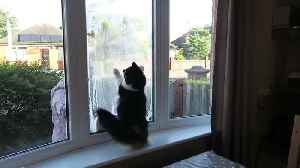News video: Energetic Cat Loses It When Owner Cleans The Outside Windows
