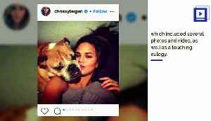 News video: Chrissy Teigen Pens Tearful Tribute and Eulogy for Dog on Instagram