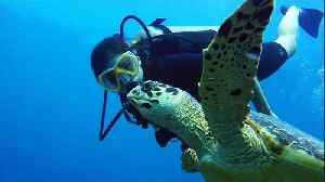News video: This Young Diver Has A Gift For Connecting With Sea Turtles