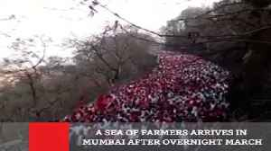 News video: A Sea Of Farmers Arrives In Mumbai After Overnight March