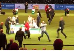 News video: PETA Protesters Disrupt Crufts Dog Show Prize Ceremony
