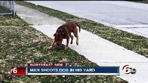News video: Dog shot after neighbor says it tried to attack him, dog's owner cited