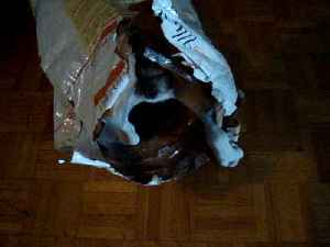 News video: Hungry Dog Goes Inside The Food Bag Looking For More Food
