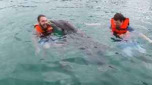 News video: Playful dolphin takes extreme liking to young man