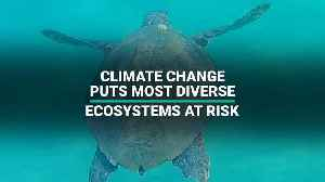News video: Climate Change Puts Most Diverse Ecosystems At Risk