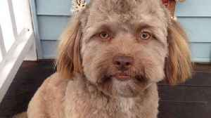 News video: The internet thinks this dog looks just like a human
