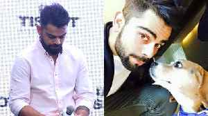 News video: Virat Kohli And Anushka Sharma Miss Their Pet Dog