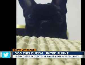 News video: Dog dies on United flight after being put in overhead bin, airline confirms