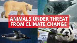 News video: Animals Under Threat From Climate Change