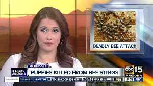 News video: Puppies die after bee attack in Glendale