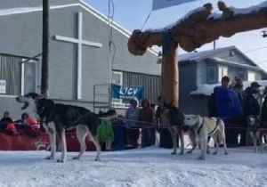 News video: Iditarod Dog Team Barks, Howls After Fourth-Place Finish