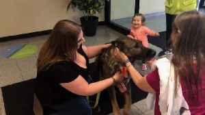 News video: German Shepherd Reunites With Family After United Flies Him to Japan by Mistake