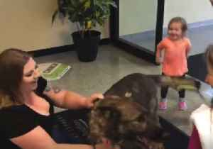 News video: Kansas Family Reunited With Dog That Was Mistakenly Flown to Japan