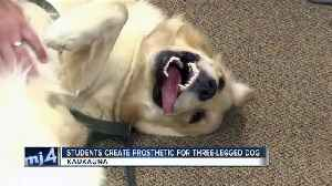 News video: High schoolers building prosthetic limb for puppy