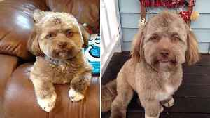 News video: This puppy's face looks just like a human being!