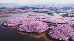News video: Drone captures stunning China blossoms