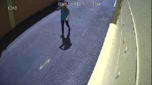 News video: Surveillance Video 1: Suspects sought in fatal pedestrian accident on Hillsborough Avenue