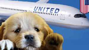 News video: United flight diverted because a dog got on the wrong plane