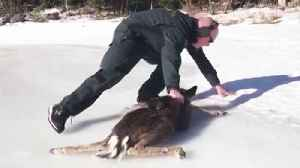 News video: Adorable Baby Deer and Coast Guard Rescuer Scramble to Get Off Ice