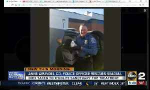 News video: Anne Arundel Co. police officer saves seagull