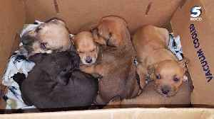 News video: Box of sick puppies dumped at Midwest City animal welfare