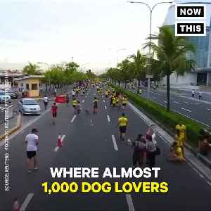 News video: Hundreds Of Dogs Join Their Owners For A Fun Run