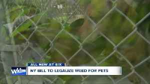 News video: New York State Bill to legalize weed for pets