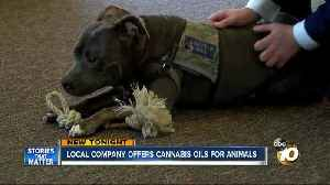 News video: Local company offers cannabis oils for animals